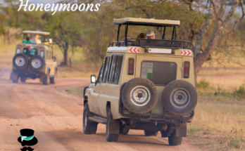 safari honeymoons